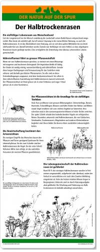 A01 Der Halbtrockenrasen