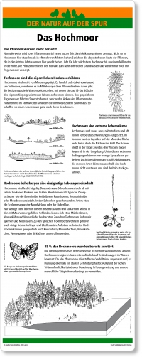 A05 Das Hochmoor