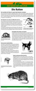 C04 Die Ratten