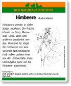 D21 Himbeere