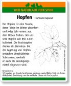 D22 Hopfen