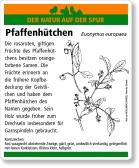 D03 Pfaffenhütchen