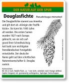 D65 Douglasfichte