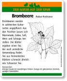 D09 Brombeere