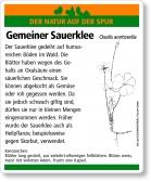 E10 Gemeiner Sauerklee