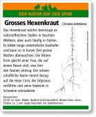 E13 Grosses Hexenkraut