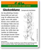 E19 Nesselblättrige Glockenblume