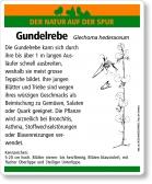 E03 Gundelrebe