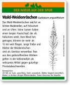 E31 Wald-Weidenröschen