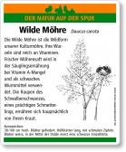 E40 Wilde Möhre