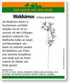 E48 Waldsimse