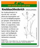 E55 Knoblauchhederich