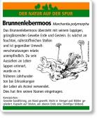 E06 Brunnenlebermoos