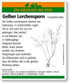 E61 Gelber Lerchensporn