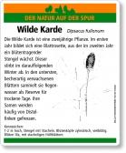 E68 Wilde Karde