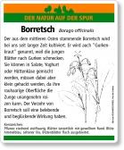 E69 Borretsch