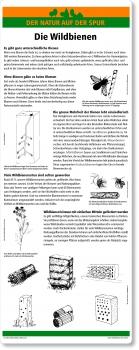 C13 Die Wildbienen