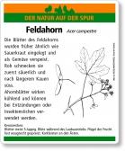D14 Feldahorn