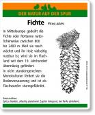 D15 Fichte