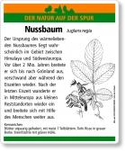 D28 Nussbaum