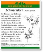 D04 Schwarzdorn
