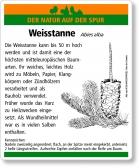 D44 Weisstanne