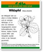 D45 Wildapfel