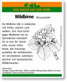 D46 Wildbirne