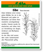 D52 Eibe