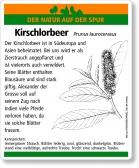D66 Kirschlorbeer